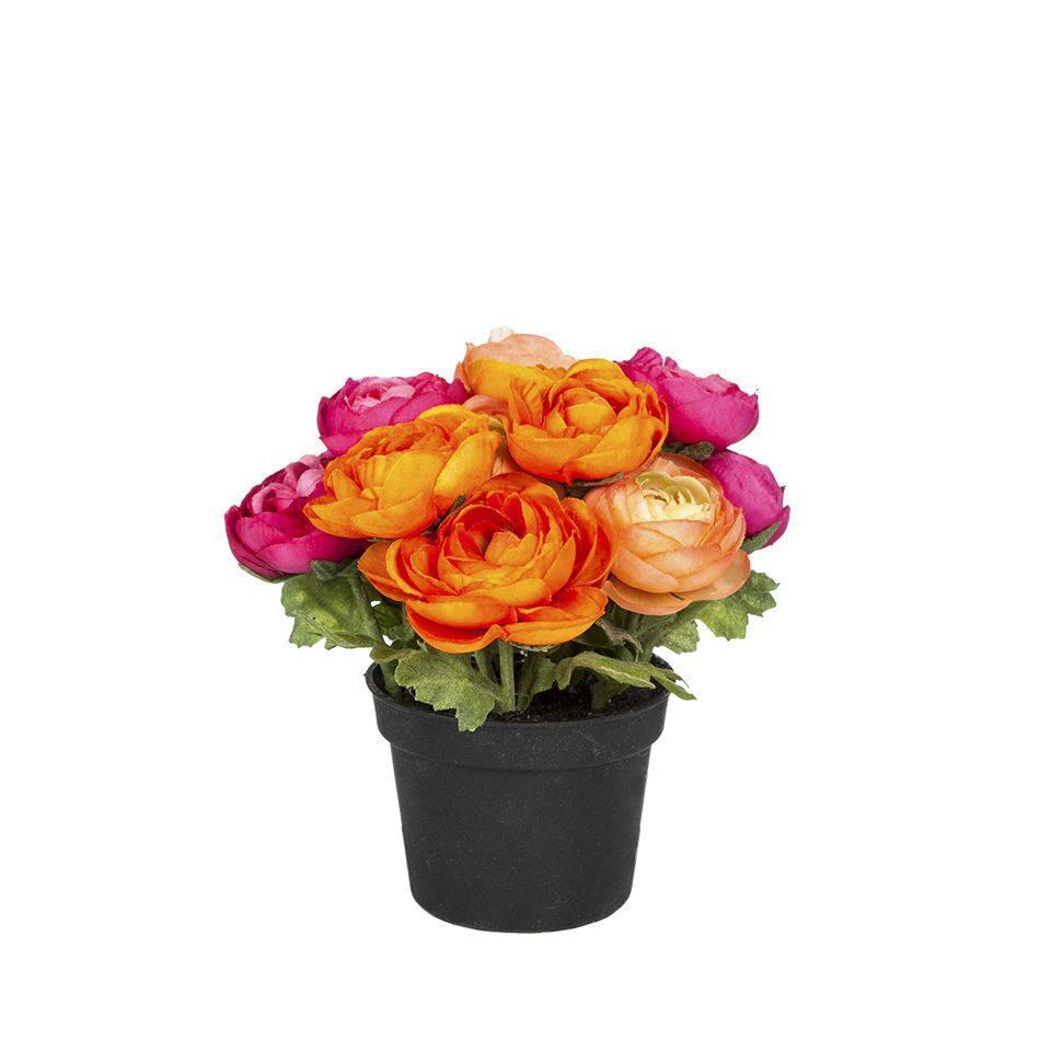Букет роз, купить цветы в горшках в саратове